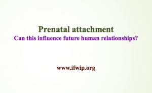 prenatal attachment